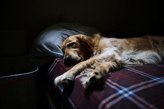 pes na posteli